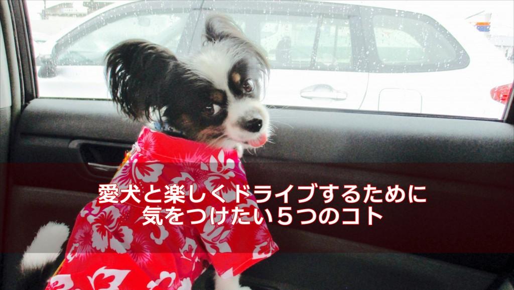 愛犬と楽しくドライブするために気をつけたい5つのコト