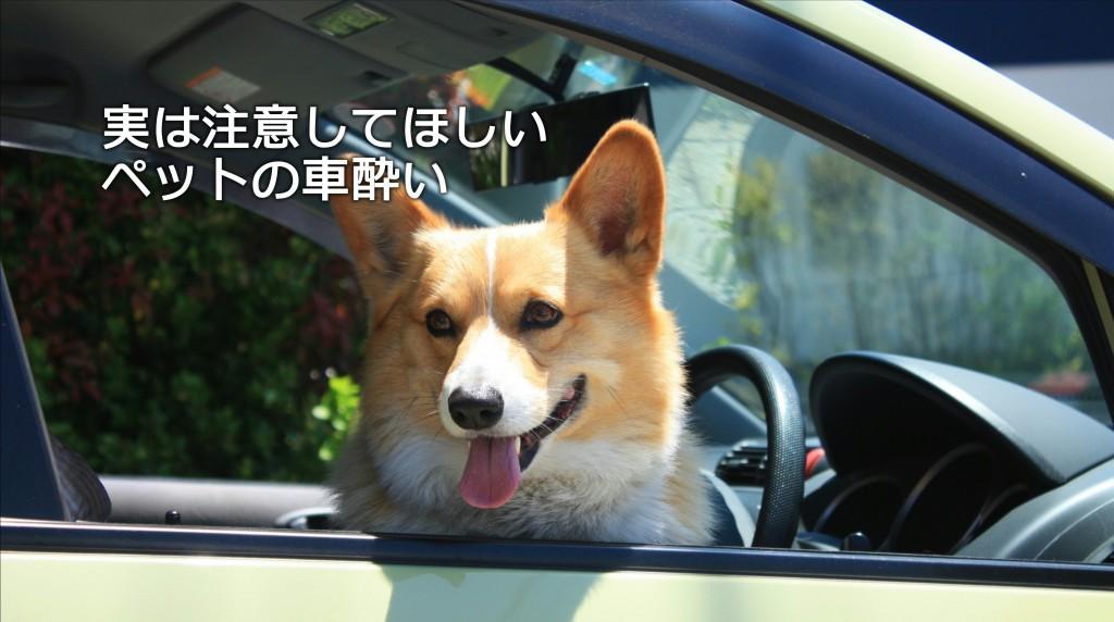実は注意してほしい、ペットの車酔い|白河市・棚倉町のガソリンスタンド