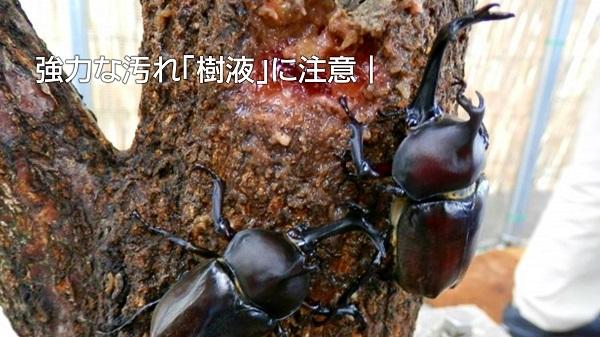 強力な汚れ「樹液」に注意|白河市・棚倉町のキーパーコーティング専門店